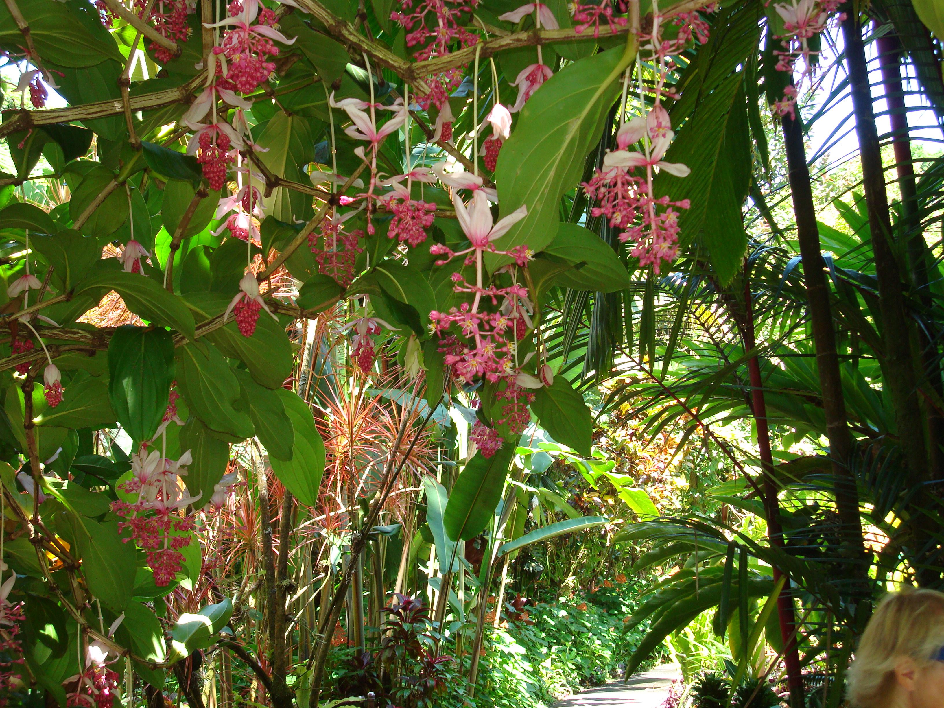The Hawaii Tropical Botanical Garden ...