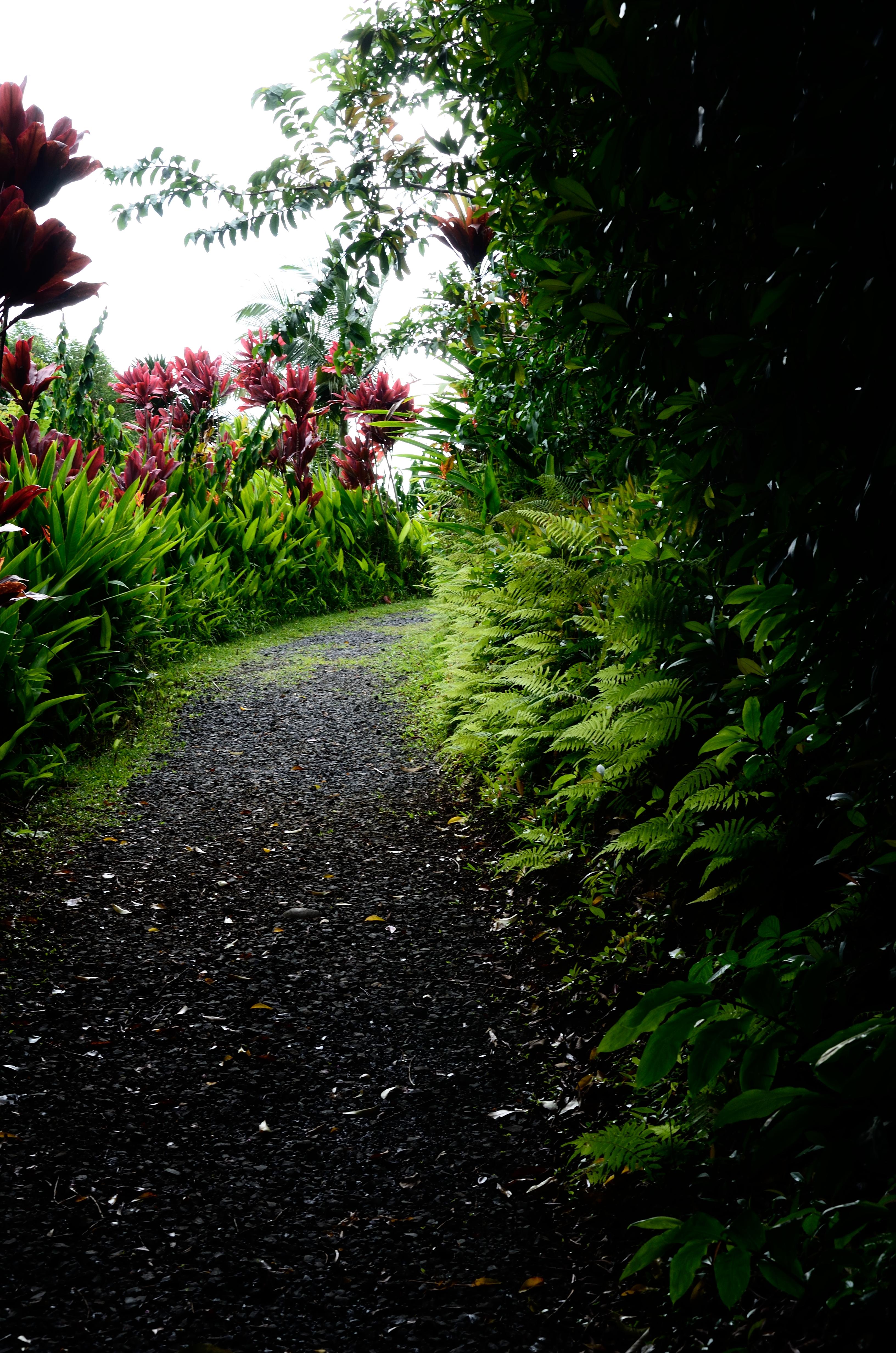 Hawaii S Botanical Gardens