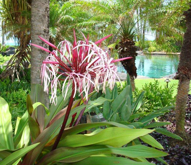 Kauai - Grand Hyatt 1