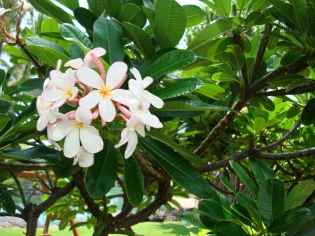Kauai - Grand Hyatt 4