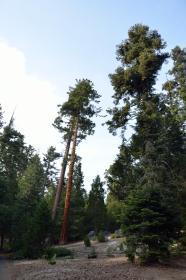 Sequoia National Park 02
