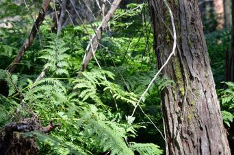 Sequoia National Park 10