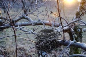 Empty Nest 01