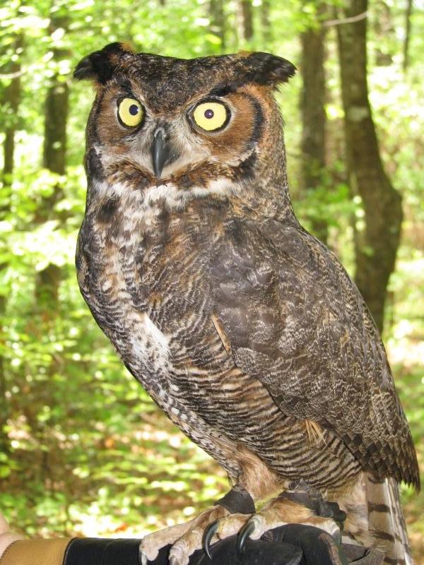 Congaree National Park Mowryjournal Com