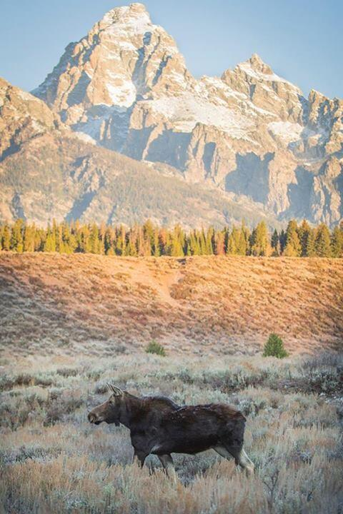 A lovely day for a stroll through Grand Teton National Park. Tweeted by the Department of the Interior, 10/22/13.