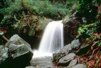 The Trillium Gap Trail runs behind 25' high Grotto Falls. From the National Park Service Website.