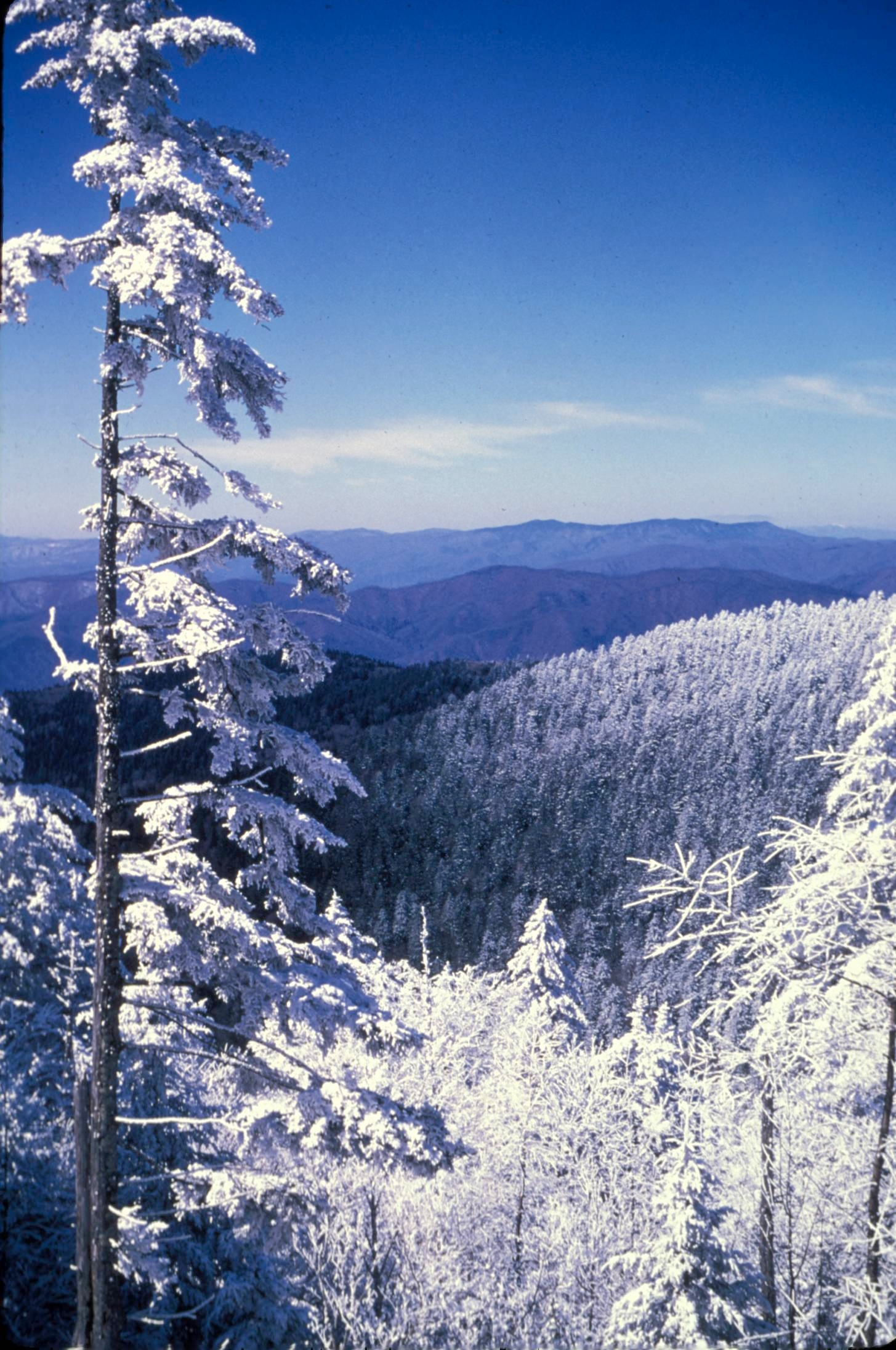 Great Smoky Mountains National Park Mowryjournal Com