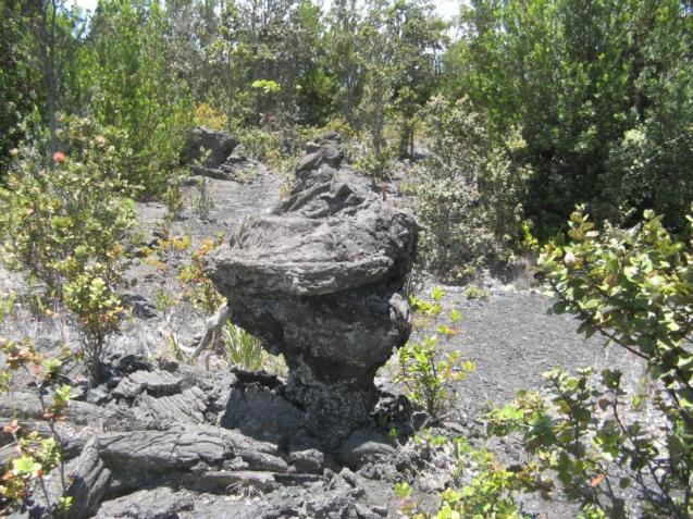 Lava trees are formed when fast moving lava flows around a tree. The cool and moist trunk causes the lava to crust around the tree. When the flow is short lived, it drains off leaving behind standing lava trees. From the Park's website.