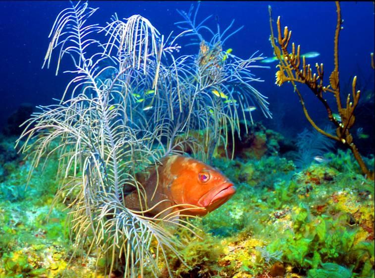 Dry Tortugas National Park Mowryjournal Com