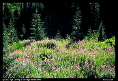 Photo courtesy of Terra Galleria. www.terragalleria.com