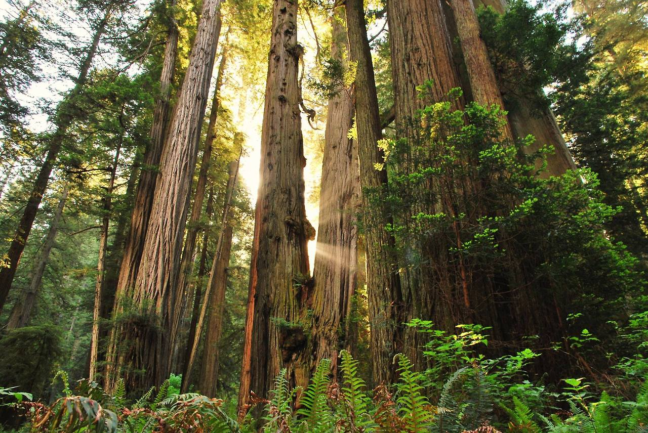 Image result for Redwood National Park, California