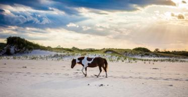 Wild pony at Assateague Island National Seashore. Photo: Zach Egolf. Tweeted by the US Department of the Interior, 5/8/14.