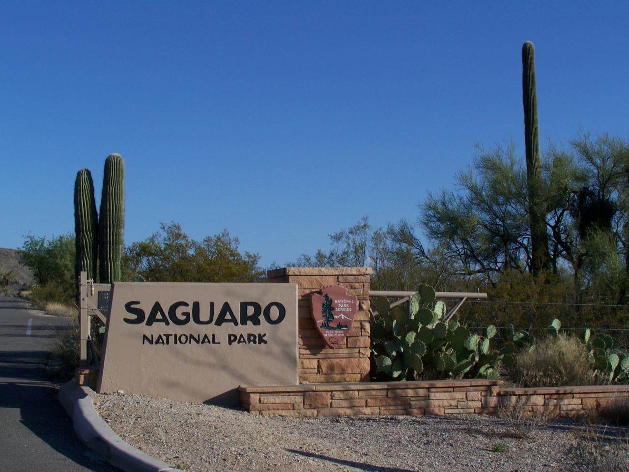 saguaro national park. Black Bedroom Furniture Sets. Home Design Ideas