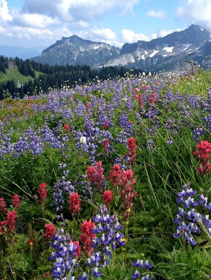 Alta Vista Trail, Mt Rainier National Park. Tweeted by the US Department of the Interior, 8/19/14.