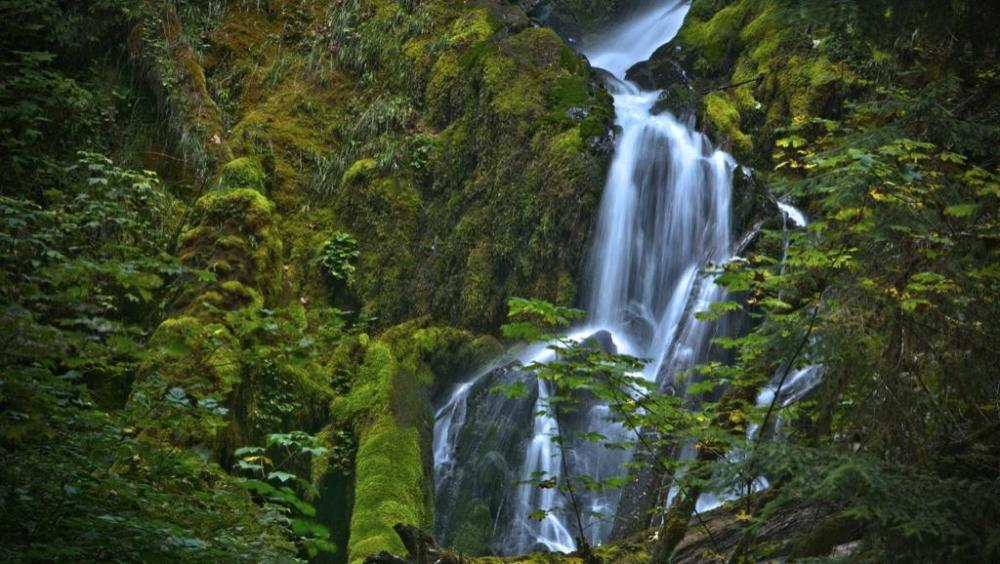 Hoh Rainfrest, Olympic National Park. Tweeted by the US Department of the Interior, 8/29/14.