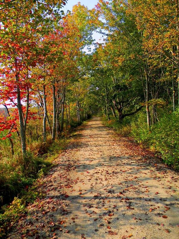 The colors of fall, at Maine's Rachel Carson National Wildlife Refuge. Tweeted by the US Department of the Interior, 9/24/14.