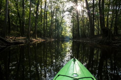 A hidden gem on the East Coast, Congaree National Park in South Carolina preserves the largest intact expanse of old growth bottomland hardwood forest in the southeastern United States. Congaree provides a sanctuary for plants and animals (including otters), a research site for scientists and a place for visitors to explore wilderness amidst giant hardwoods and towering pines. Photo courtesy of Jacob Frank. Posted on Tumblr by the US Department of the Interior, 1/30/15.