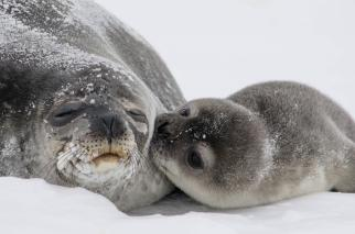 A kiss from a seal pup would make any mother's day. Tweeted by the US Department of the Interior, 3/12/15.