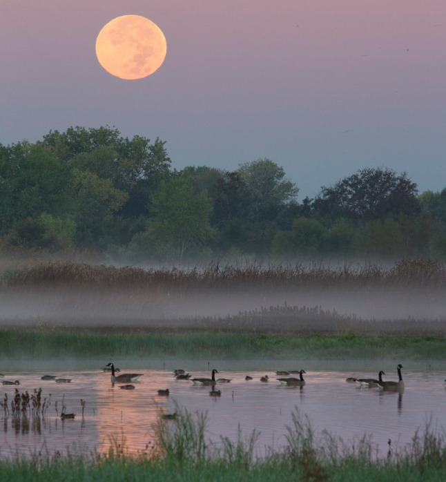 California's Cosumnes River Preserve National Wildlife Refuge. Photo by Bob Wick. Posted on Tumblr by the US Department of the Interior, 4/10/15.