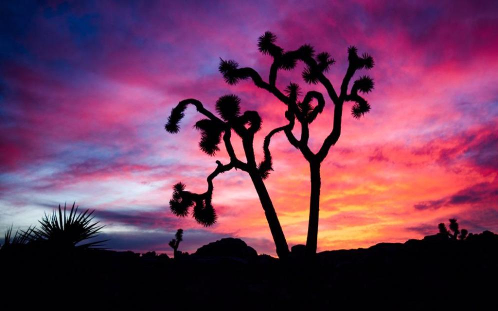 California's Joshua Tree National Park at the colorful end of a day. Photo by by Danner Bradshaw. Tweeted by the US Department of the Interior, 5/29/15.