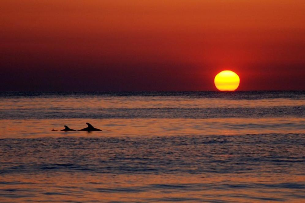 Sunset at North Carolina's Cape Hatteras National Seashore. Photo by C. Denise Maples. Tweeted by the US Department of the Interior, 6/8/15.