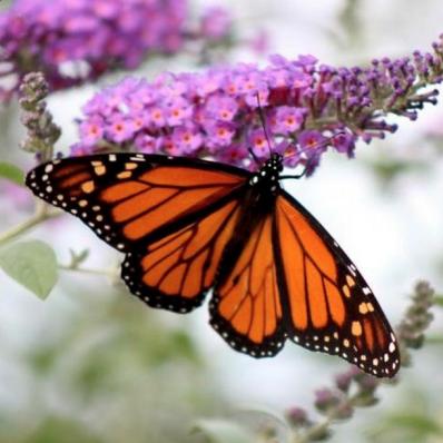 Pollinators 2