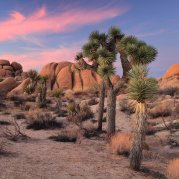 Spiky, twisted Joshua trees create a surreal sunset at California's Joshua Tree National Park. Photo by David Bahr. Tweeted by the US Department of the Interior, 3/2/16.