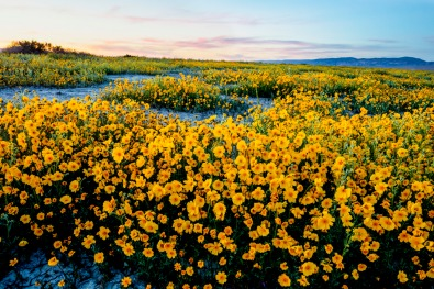 Carrizo Plain National Monument. Photo by Bob Wicks, BLM. Posted on Tumblr by the US Department of the Interior, 4/2/16.