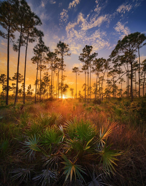 Florida Everglades VIP Tour at Everglades Holiday Park