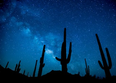 The Sonoran Desert National Monument in Arizona is the most biologically diverse of the North American deserts, and its namesake monument protects an extensive saguaro cactus forest that visitors can hike through to see classic desert vistas. Photo of the Milky Way shining above saguaro cacti by Bob Wick, BLM. Tweeted by the US Department of the Interior, 6/13/16.