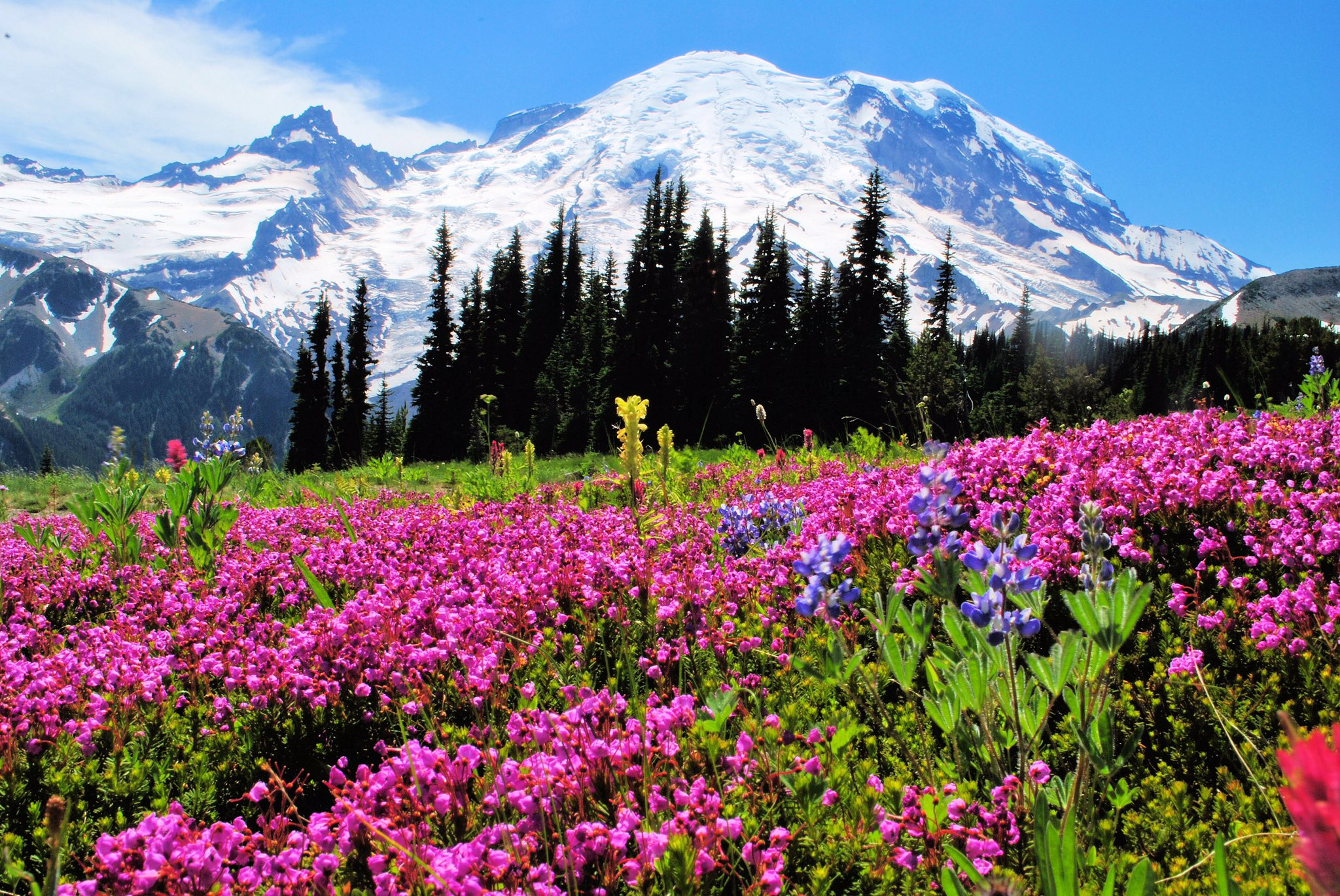 Spring Wildflowers Of The Mid Atlantic Region Movie HD free download 720p