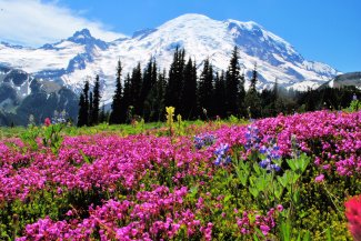 Nature paints with bold wildflower colors at Washington's Mount Rainier National Park. Photo by Bob Bass. Posted on Twitter by the US Department of the Interior, 7/12/16.