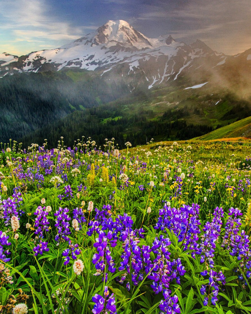 Washington's Mount Baker Wilderness is a great place to enjoy the solitude, peace and challenge that hiking offers. Remember to walk lightly in all wilderness areas, so that many generations more may discover this place too. Photo by Dene Miles. Posted on Tumblr by the US Department of the Interior, 8/14/16.