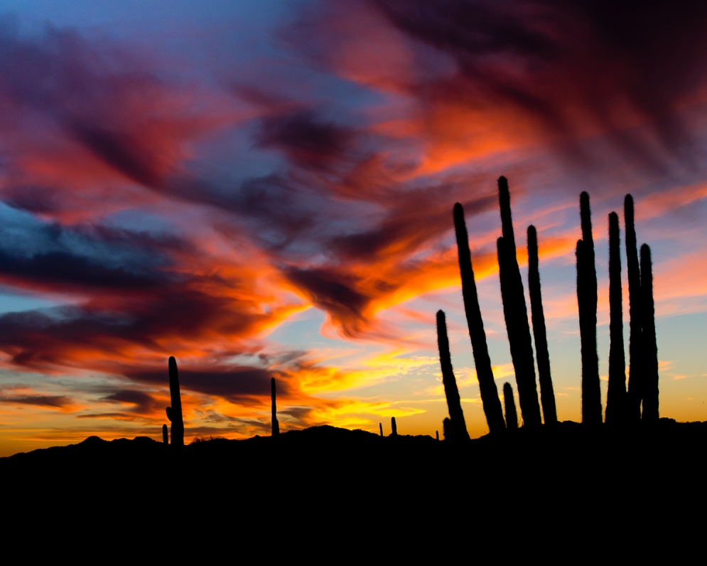 Organ Pipe Cactus National Monument in Arizona protects spectacular wilderness in the heart of the Sonoran Desert. The park is the only place in the United States where visitors can see large stands of organ pipe cacti, which can live to be more than 150 years old. Explore this Southwest gem with activities like hiking, camping, wildflower walks, scenic drives and night sky gazing. Sunset photo by Jim Dunham. Posted on Tumblr by the US Department of the Interior, 7/28/16.
