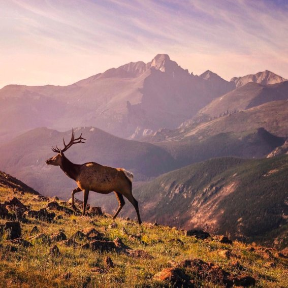 It pays to get up early! Stunning views & majestic wildlife await at Rocky Mountain National Park. Photo by Brandon Sharpe. Tweeted by the US Department of the Interior, 9/13/16.