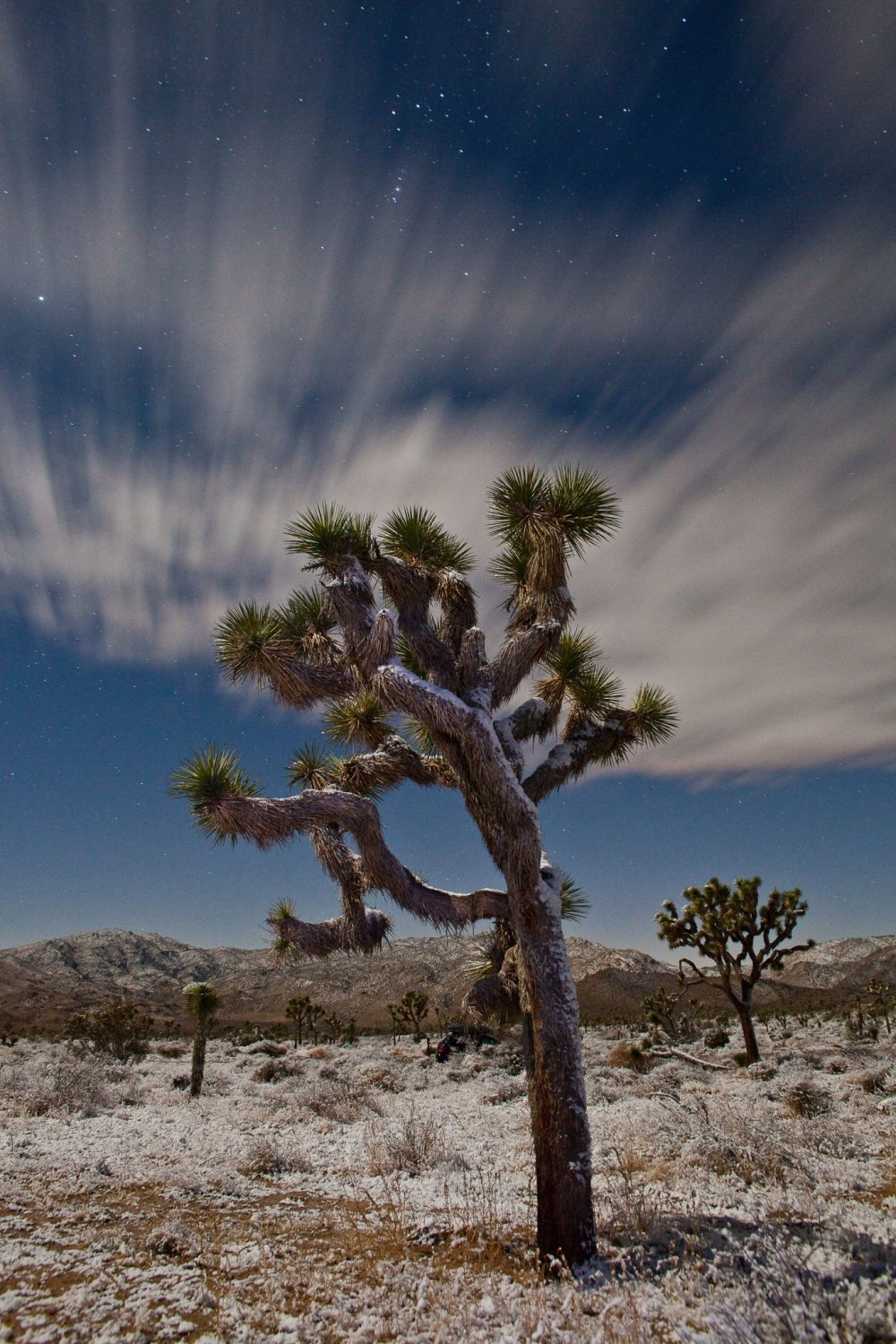 Snow decorates the desert under a dreamy night sky at California's Joshua Tree National Park. Photo by Craig Schoenbaum. Tweeted by the US Department of the Interior, 12/20/16.