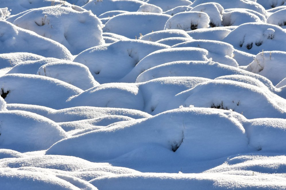 The sage steppe after a snow storm with no wind. Photo by Tom Koerner/USFWS. Tweeted by the US Fish & Wildlife Service, 12/17/16.