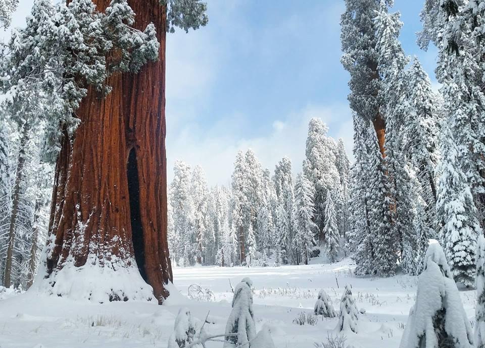 Sequoia Np 35 Snow Mowryjournal Com