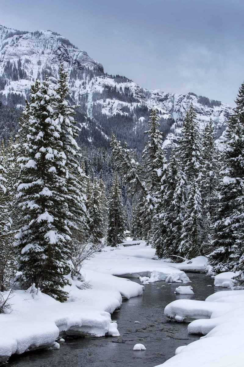 Explore a winter wonderland: Soda Butte Creek at Yellowstone National Park. Photo by Andrew Slaton. Tweeted by the US Department of the Interior, 1/19/17.