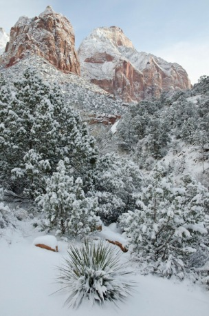 Zion National Park's reddish rocks wear a coat of snow in this serene winter photo from last January. After winter storms, snow can disappear within just a few hours at lower elevations, making these magical sights short-lived. If you're visiting, be sure to check with the park for the most recent conditions and closures. Photo by Sierra Coon, National Park Service. Posted on Tumblr by the US Department of the Interior, 1/19/17.