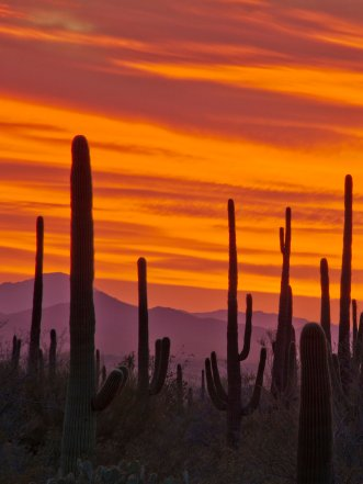 Desert sunsets are some of the best. Case in point: Saguaro National Park. Photo by Michel Hersen. Tweeted by the US Department of the Interior, 2/22/17.
